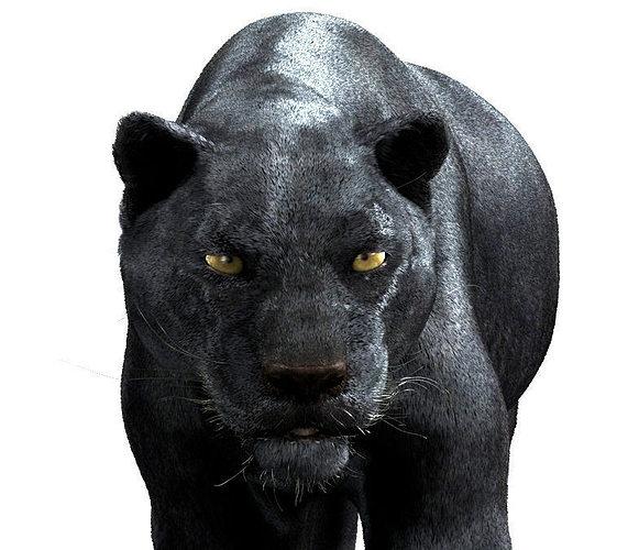 3d Panther Maya Cgtrader