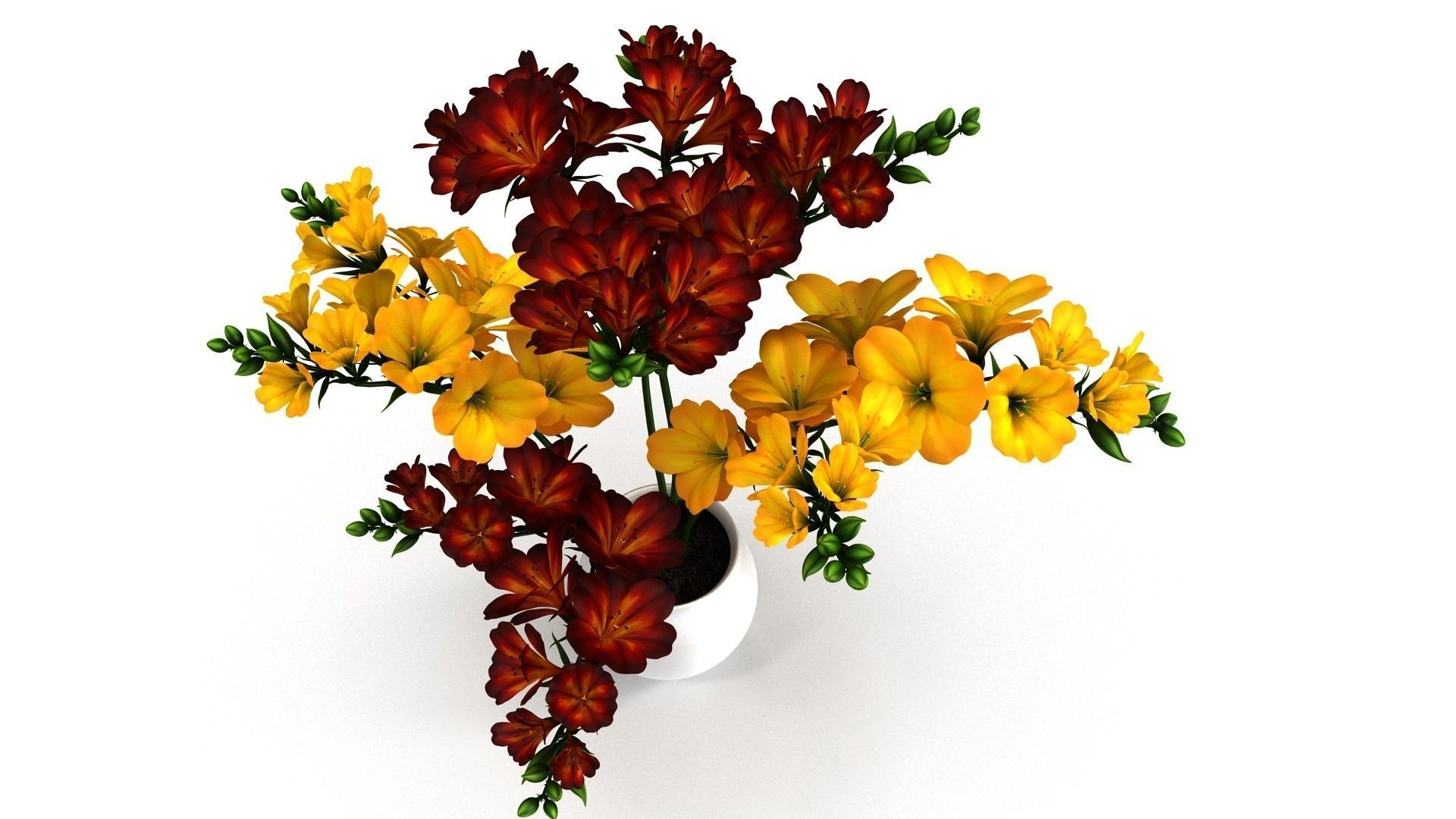 Red-Yellow Flowers in Pot
