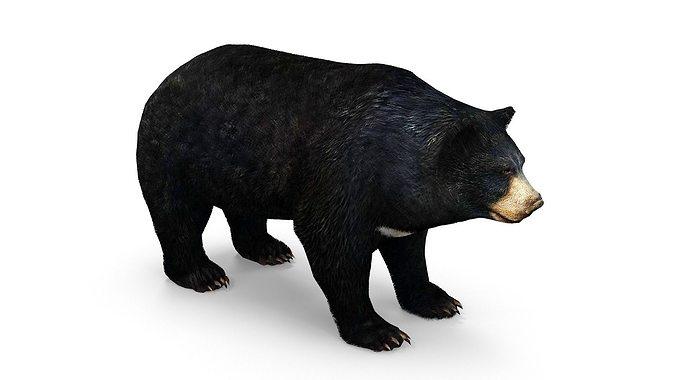 bear low poly 3d model low-poly max obj fbx dae mtl 1