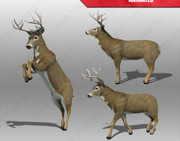 deer animated 3d asset VR / AR ready