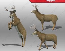 3d asset deer whitetail rigged VR / AR ready