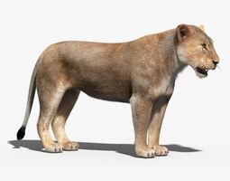 Lioness FUR 3D Model
