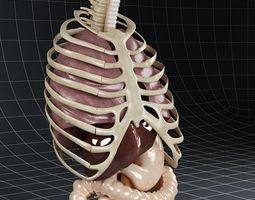 Anatomy Internal Organs 02 3D Model