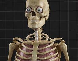 Anatomy Internal Organs Male 3D Model