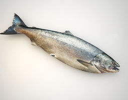 3D model Fresh Raw Salmon