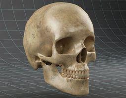 anatomy skull 02 3d model max obj fbx
