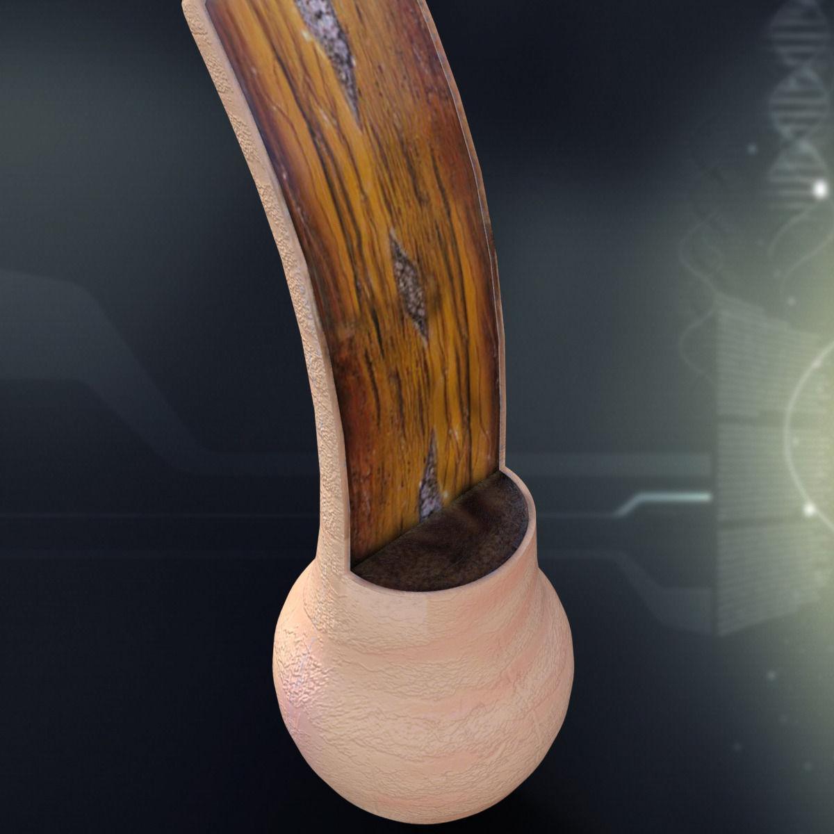 3D Human Hair Anatomy | CGTrader
