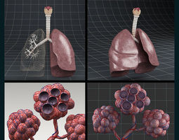 3D Anatomy collection 02