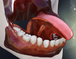 Human Teeth Gums and Tongue Anatomy 3D