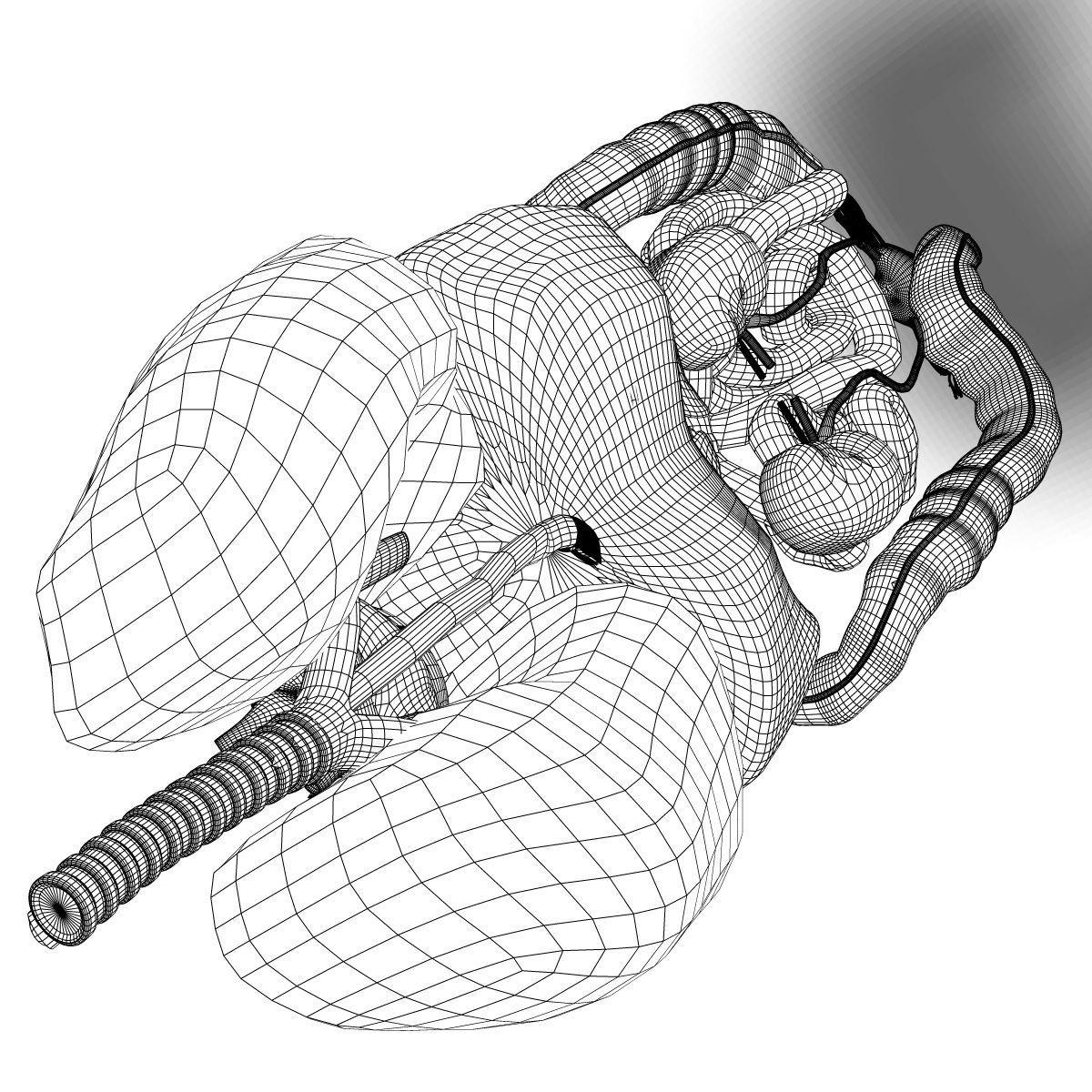 Human Female Internal Organs Anatomy 3d Model