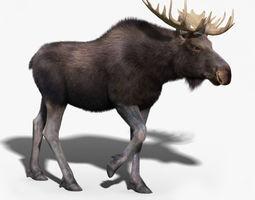 Moose FUR RIGGED 3D Model