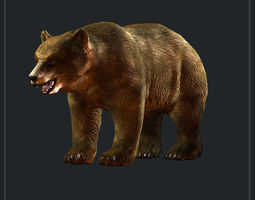 broun bear 3D Model