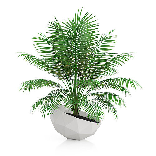 3d Model Palm Tree In Modern Pot Cgtrader