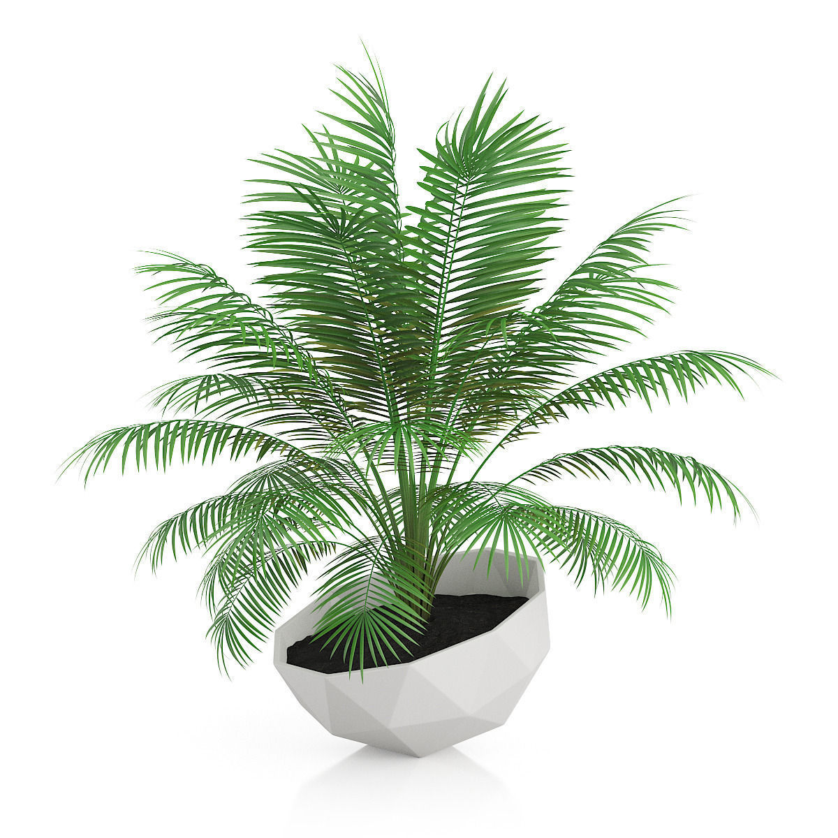 Palm Tree In Modern Pot 3d Model Max Obj Fbx C4d