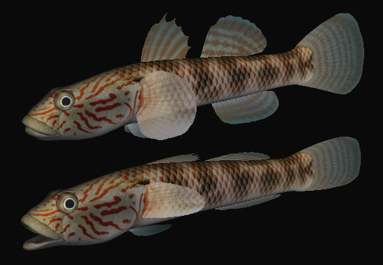 Freshwater goby cb 3d model game ready 3ds for Freshwater goby fish
