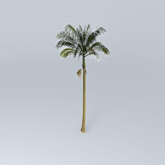 Alexandra Palm Archontophoenix alexandrae 01 free 3D Model ...