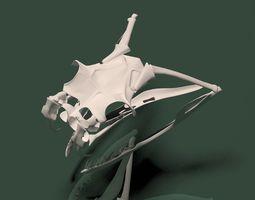 3d model snake skull rigged