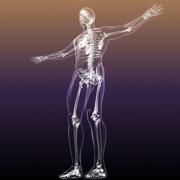 Human Skeleton in Body 3D | CGTrader