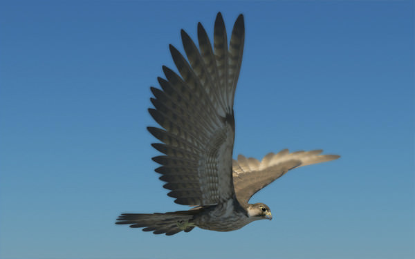 Peregrine Falcon Folded Wings 3d Model Game Ready Animated