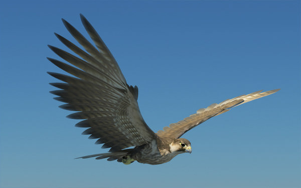 3D model Peregrine Falcon Folded Wings VR / AR / low-poly ...