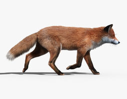 red fox fur animated 3d model rigged animated max obj fbx