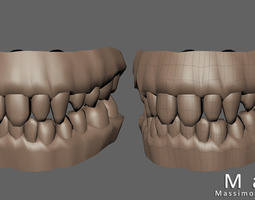 Teeth and gums 3D model