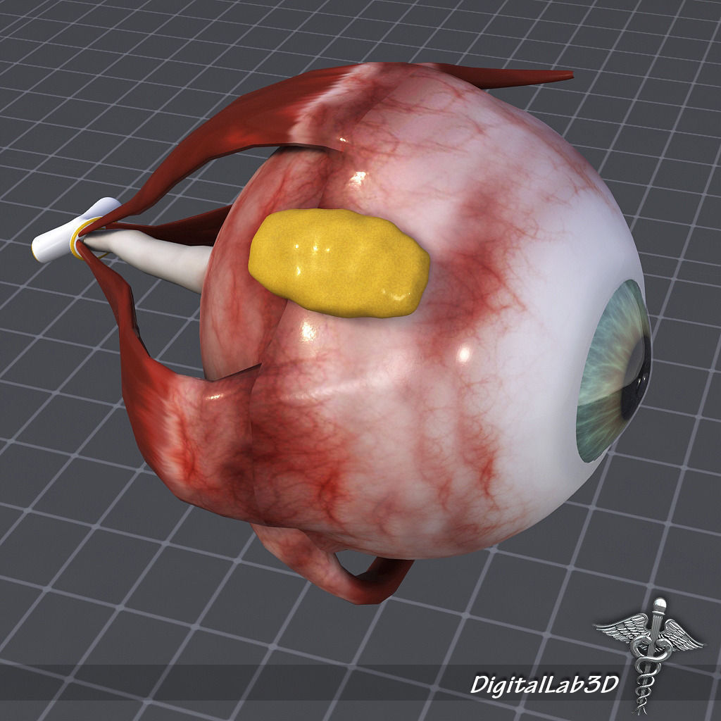 visual 3D model Human Eye Anatomy | CGTrader