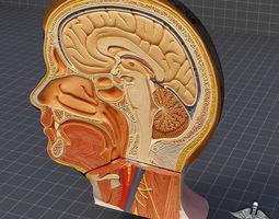 human head anatomy 3d model max obj 3ds c4d ma mb gmf