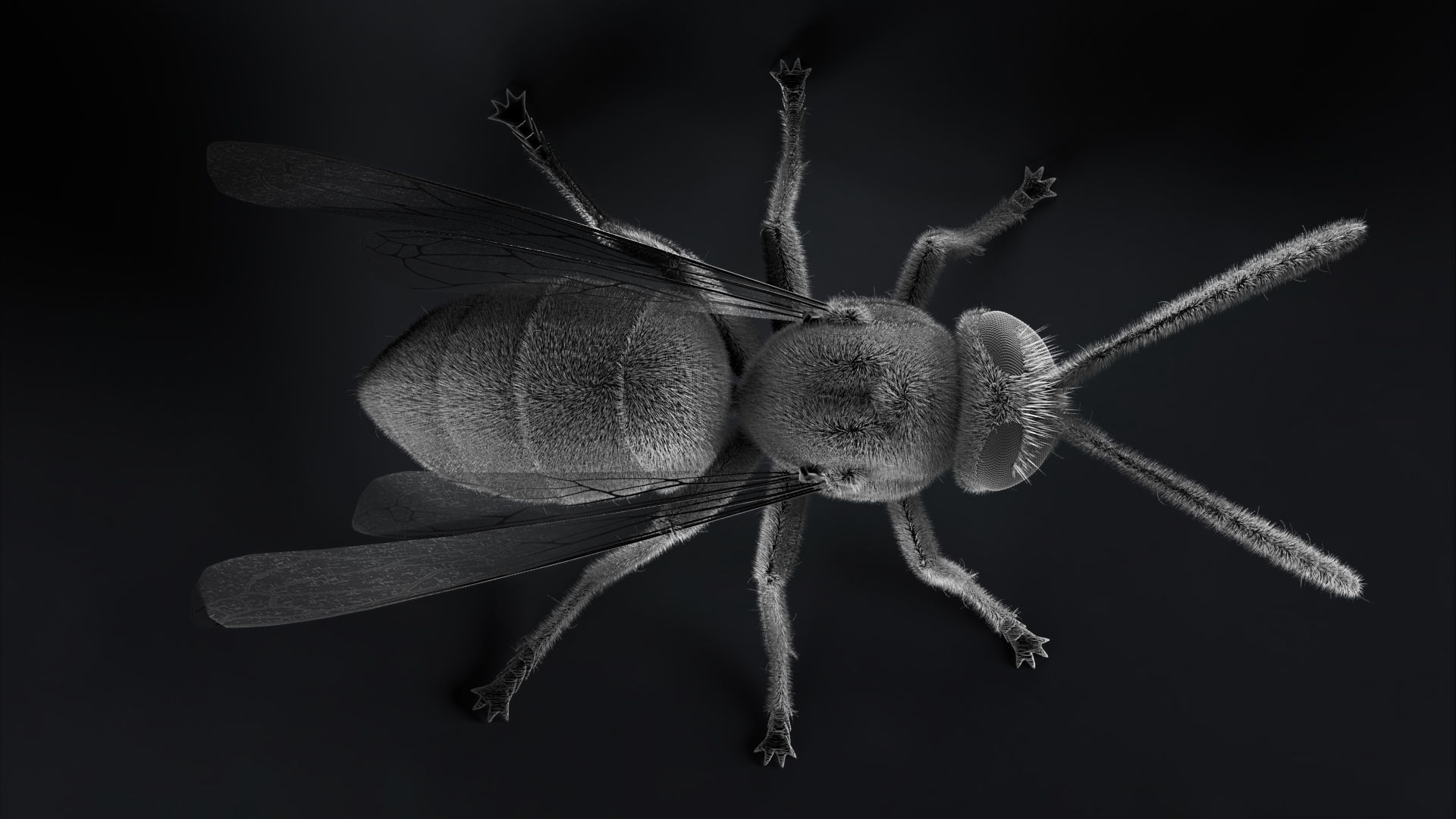 Wasp Micrography PBR VR