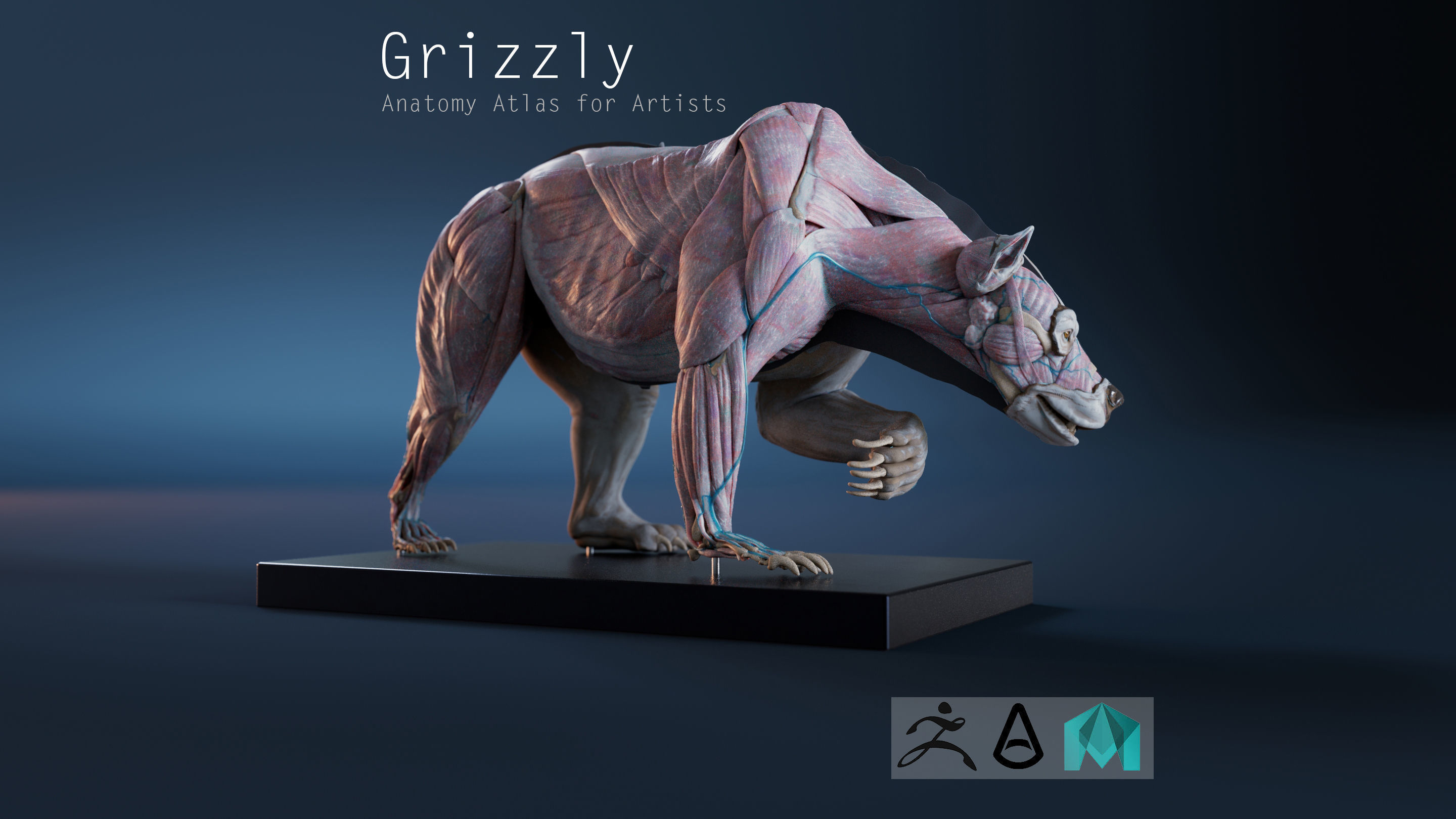 Digital Grizzly bear anatomy Atlas for Artists and creature FX