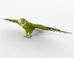 Parakeet 3D model