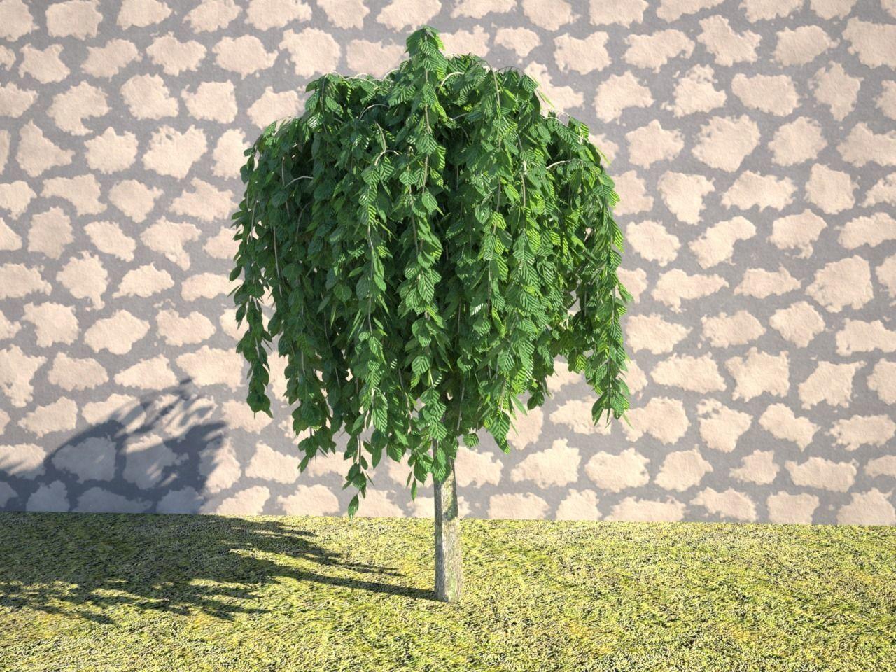 Realistic Tree Salix pendula