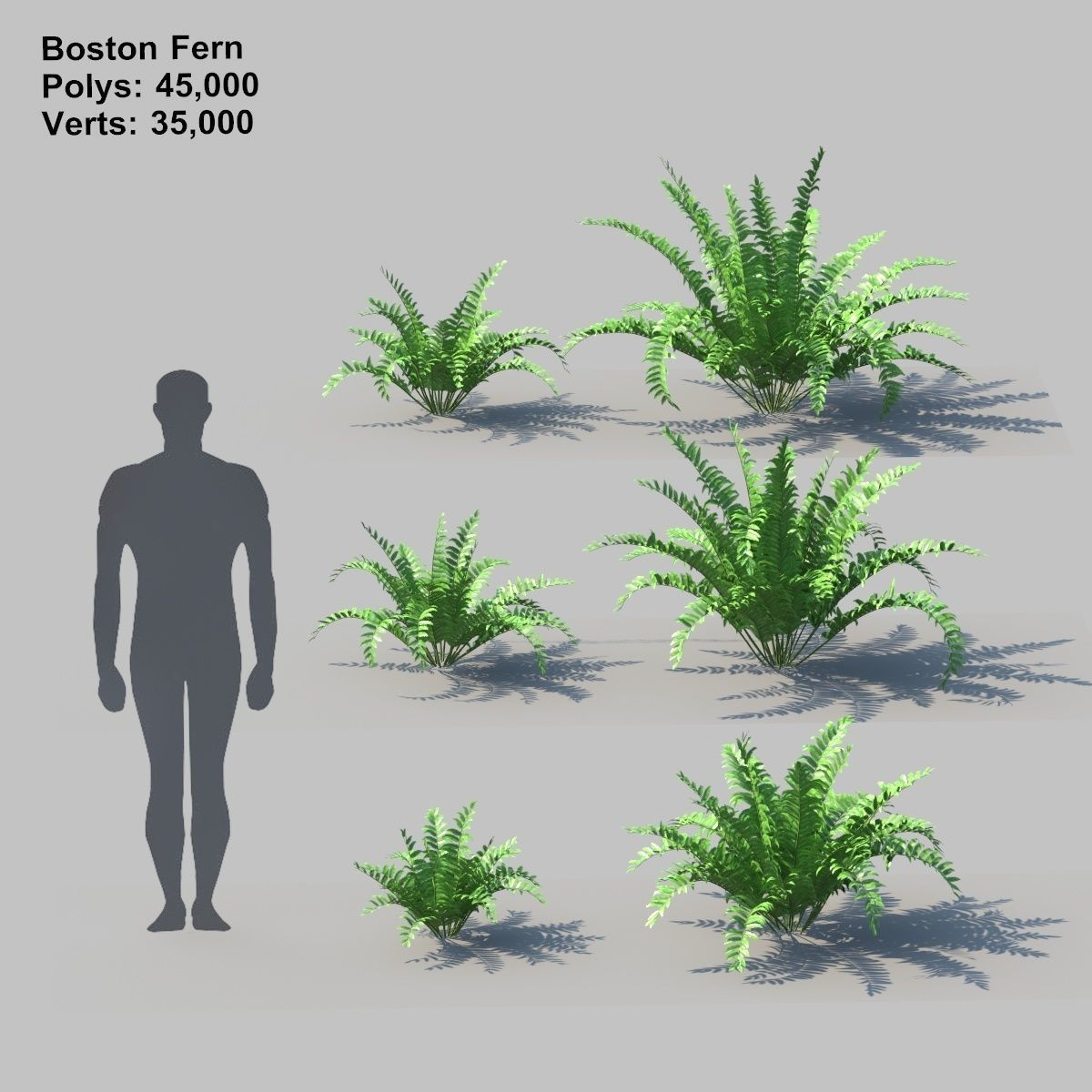 3d Model Boston Fern With Animation Cgtrader