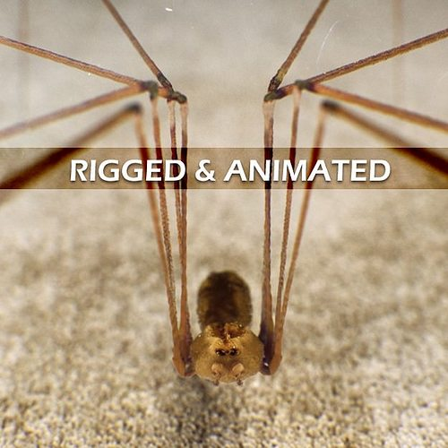 spider pholcus phalangioides rigged 3d model rigged animated max 1