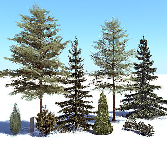 conifer trees 3d model max 1