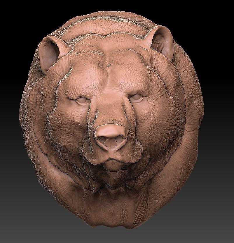 The head of the bear