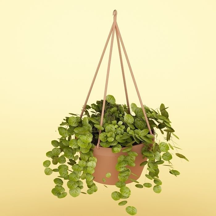 Plant 34