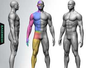 Muscular Male Basemesh 3D