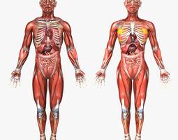Anatomy 3D Models | CGTrader