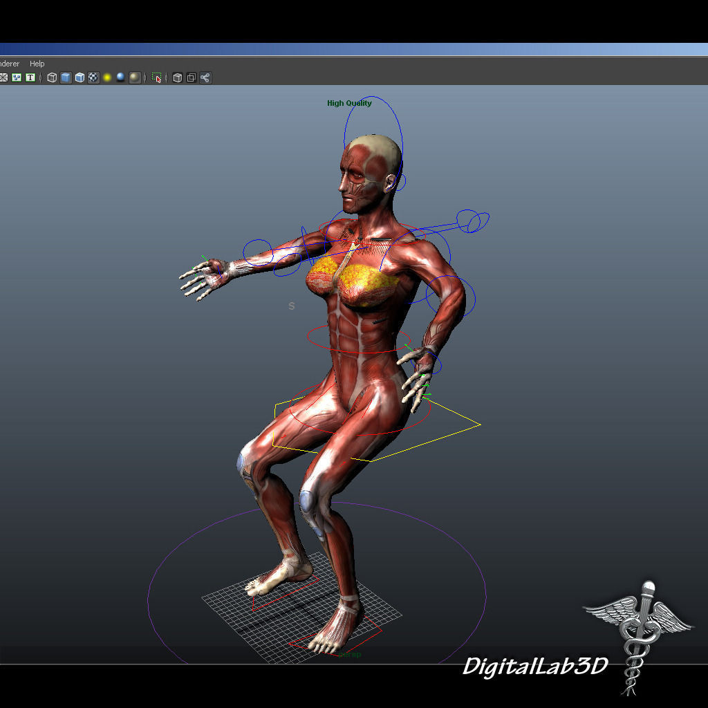 3D Collection Rigged - Human Male and Female Anatomy