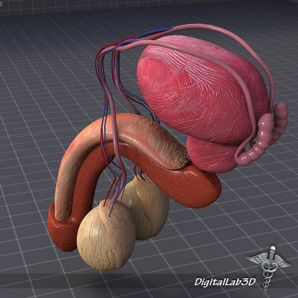 Фото человека с двумя половыми органами 19 фотография