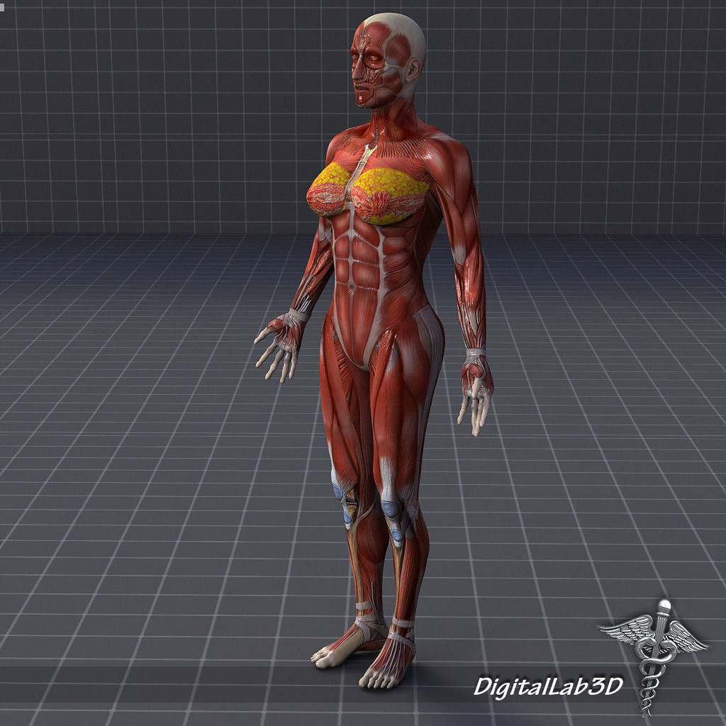 3d animated muscle females adult photos