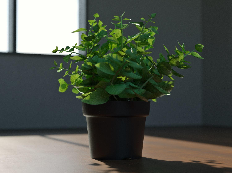 Decoration Plant