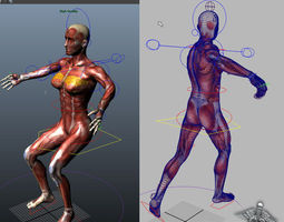 collection rigged - male and female muscular system 3d model ma mb