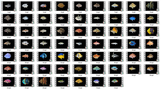 game ready pack 1 - low poly rif fish collection animated  3d model low-poly rigged animated fbx 1