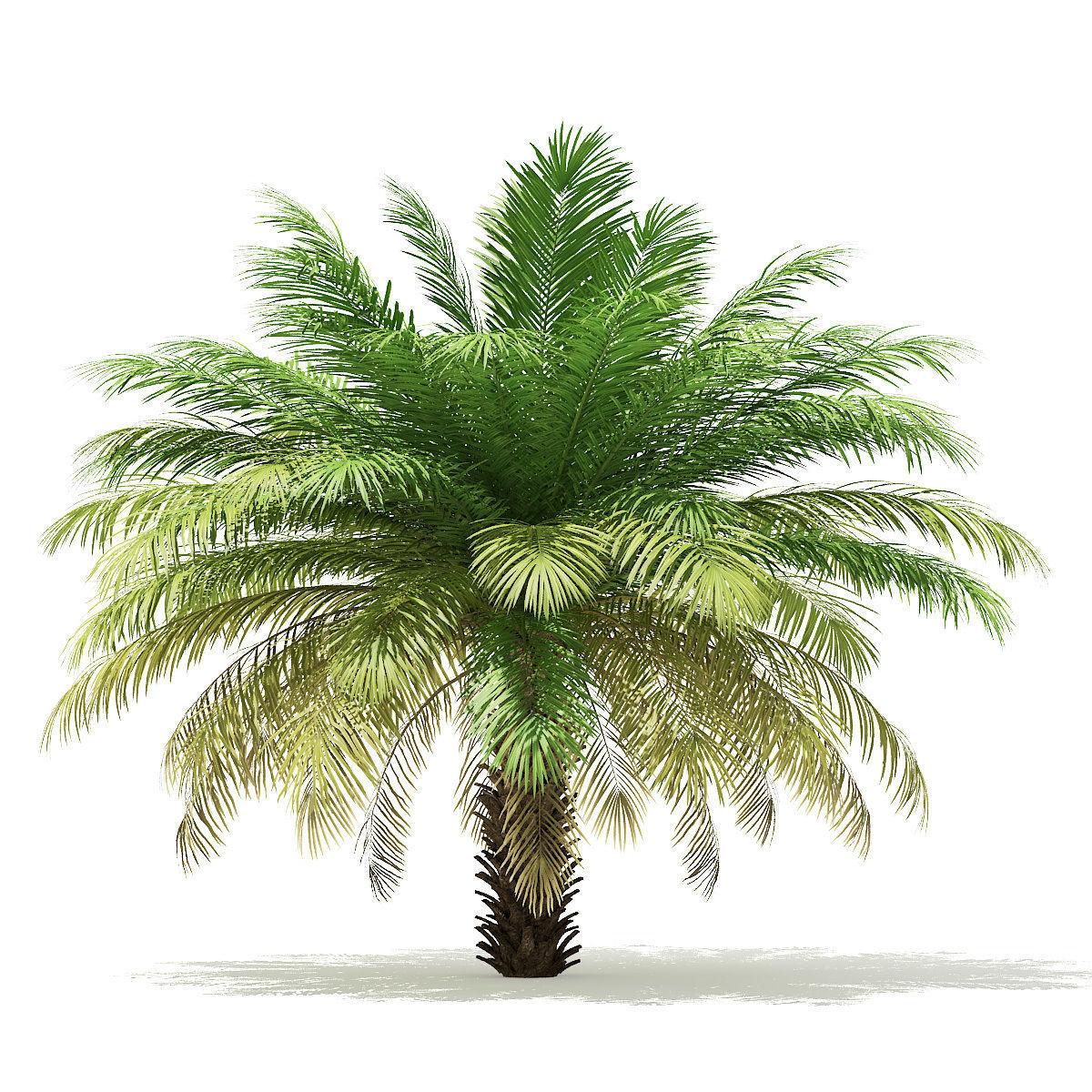 Date Palm Tree 3D Model 4m