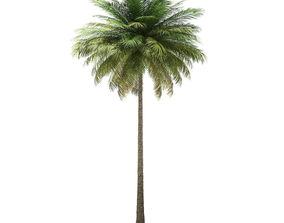 Coconut Palm Tree 3D Model 10m