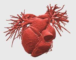 3d print model heart