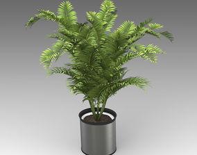 Areca Palm Plant 18 3D model