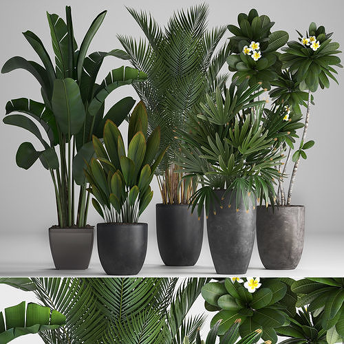 collection of ornamental plants in pots 3d model max obj mtl fbx 1